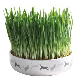 Kattgräs med keramikskål...