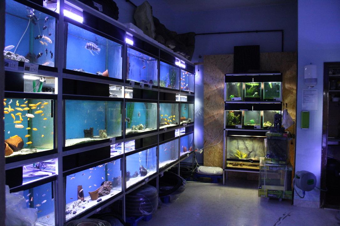 En vägg av akvarium