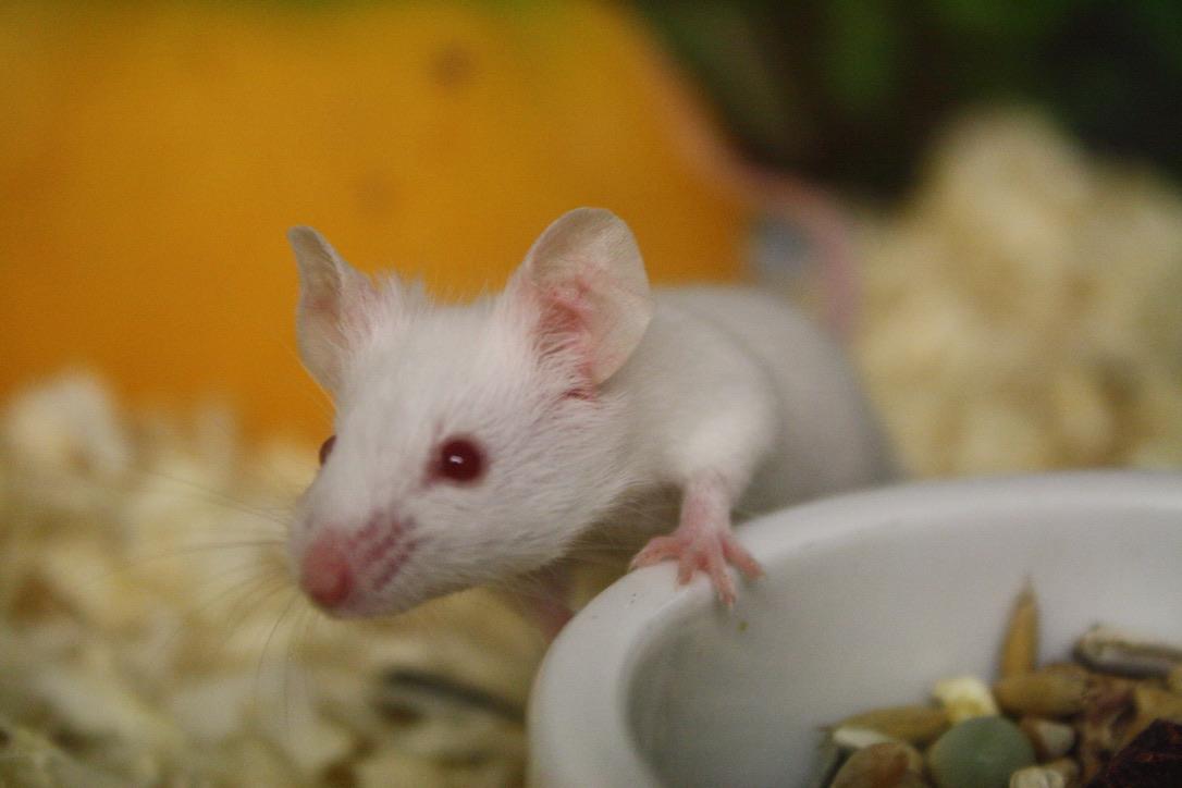 En mus i litet hus